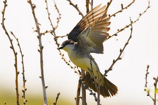 Bird, Animals In The Wild, Animal, Vertebrate