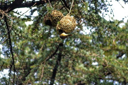Bird, Feeding, Babies, Chicks, Nest, Breast, Baby
