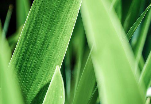 Plant, Leaf, Green, Background, Texture