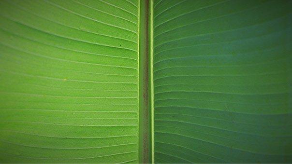 Leaf, Palm, James, Leaf Green, Background, Banner