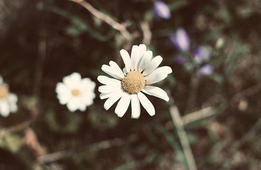 Flower, Summer, Nature, Spring, Plant, Garden, Blossom