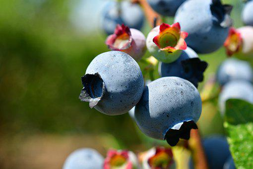 Blueberries, Superfoods, Antioxidants, Healthy Foods