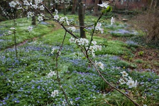 Spring, Blossom, Flower, Bloom, Branch, Garden, Petals