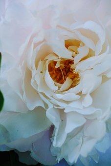 Macro, Flower, Nature, Plant, Garden, Summer, Figure