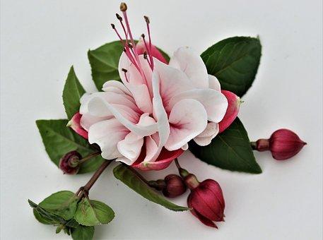 Flower, Buds, Bloom, Nature, Plant, Petals, Flora