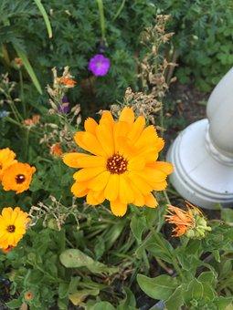 Yellow, Garden, Nature, Sunflower, Bloom, Flowers