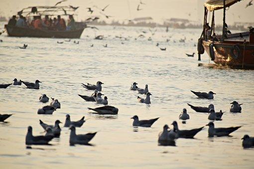 Seabirds, Ganges, Seagulls, Flight, Holy, Culture