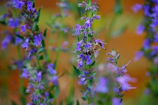 Bees Feed, Garden, Purple, Nature, Pollen, Bloom