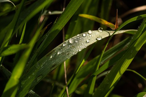 Rain, Drops, Natural, Wet, Water, Raindrops, Green