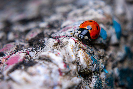 Macro, Ladybug, Insect, Nature, Red