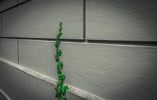 Ivy, Facade, Climber Plant, Wall, Building, Hauswand