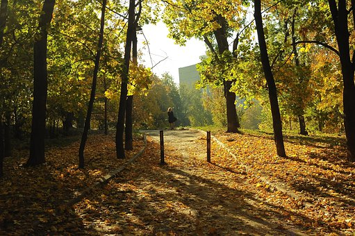 Park, Autumn, Sun, Light, Girl, Shadow, Yellow, Sheet