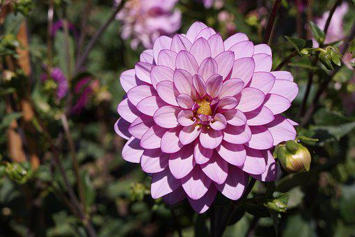 Flower, Petals, Nature, Blossom, Pink, Blooming