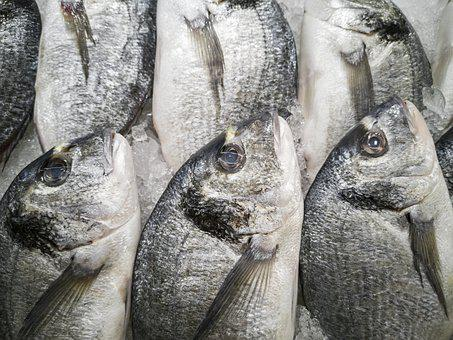 Fish, Market, Sunday, Cook, Delicious, Nutrition