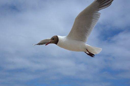 Seagull, Flying, Bird, Sky, Blue, Sea, Clouds, Ocean