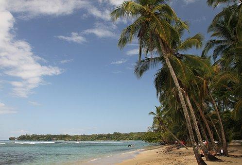 Palms, Beach, Island, Sea, Nature, Sand, Paradise, Palm
