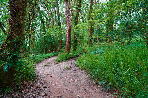 Forest, Woodland, Path, Pathway, Nature, Foliage, Woods