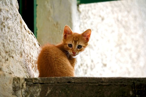 Cat, Small, Cute, Kitten, Playful, Pets, Sweet, Pet