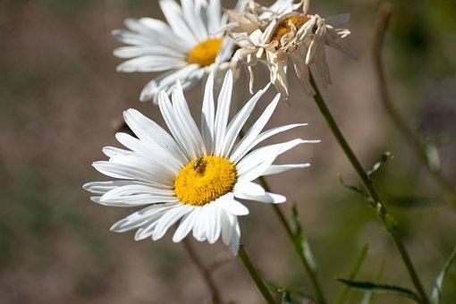 Flowers, Plants, Flower, Plant, Spring, Garden, Flora