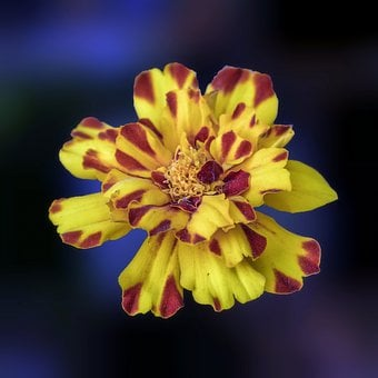 Flower, Exotic, Plant, Yellow, Red, Petals, Nature