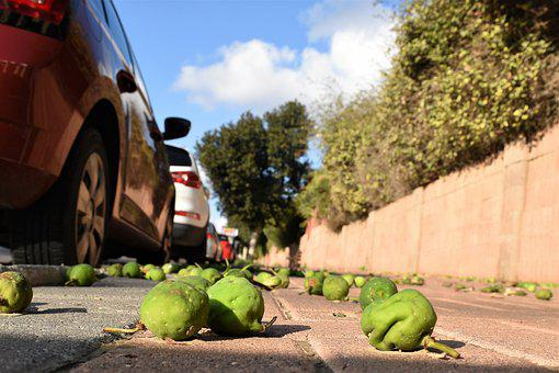 Cars, Road, City, Vehicle, Urban, Auto, Fruits, Autumn