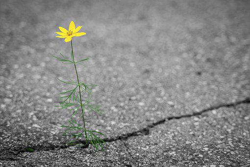 Flower, Road, Crack, Yellow, Alone, Lonely, Nature