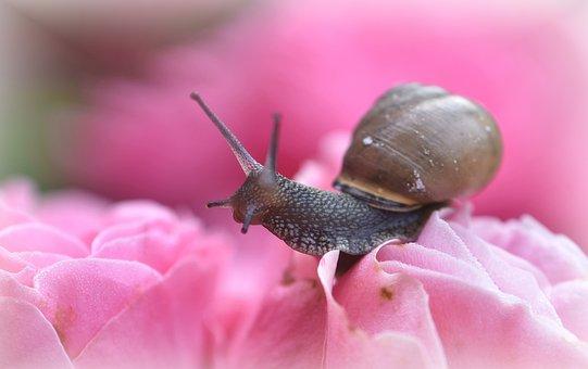 Snail, Crawl, Mollusk, Slowly, Probe, Close Up