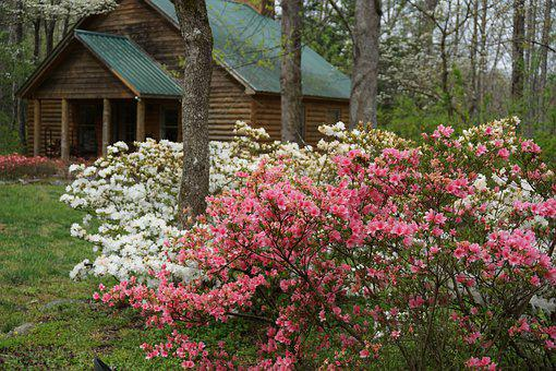 Cabin, Smoky Mountains, Spring Blossoms, Tennessee