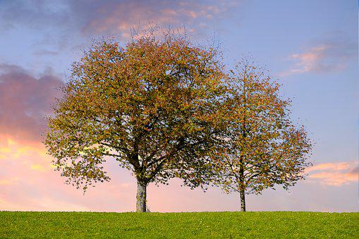 Trees, Leaves, Autumn, Afterglow, Abendstimmung, Sunset