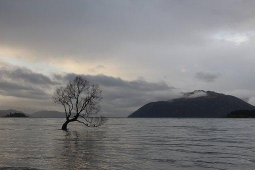 Wanaka, Tree, Lake, Mountain, Cloudiness