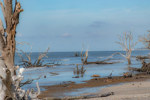 Beach, Driftwood, Unpopulated, Nature, Coast, Water
