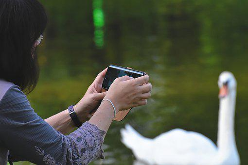 Woman, Lake, Photograph, Swan, Photo, Water, Nature