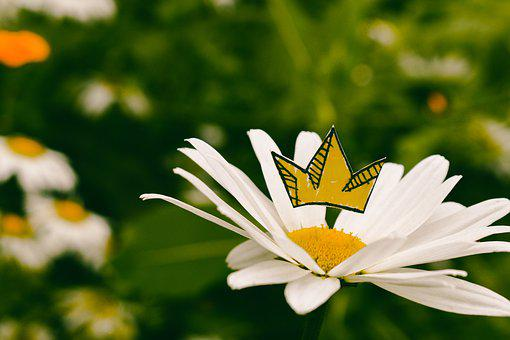 King, Daisy, Crown, Royalty, Flower, Yellow, White