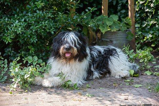 Dog, Hairy, Cute, Pet, Animal, Portrait, Adorable