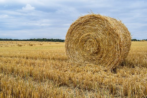Hay, Hay Bale, Landscape, Nature, Agriculture