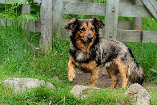 Dog, Animal, Wood, Fence, Pet, Cat, Canine, Portrait