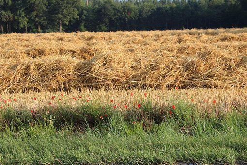 Landscape, Straw, Poppy, Arable, Agriculture, Nature