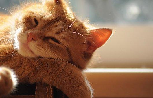Redhead, Cat, Bask, In The Sun, Sleep, Sweet, Dream