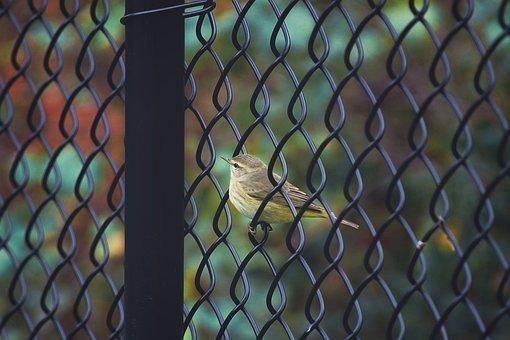 Bird, Ave, Nature, Plumage, Birds, Animals, Songbird