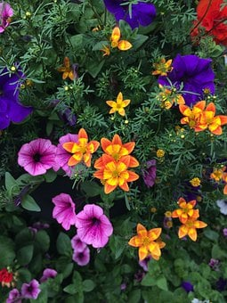 Flowers, Pansies, Pansy, Spring, Colorful, Bloom
