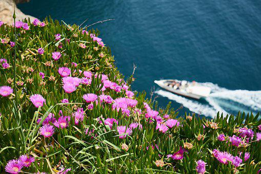 Flower, Marine, Boat, Travel, Ocean, High, Wave, Boots
