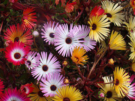 Flowers, Garden, Colorful