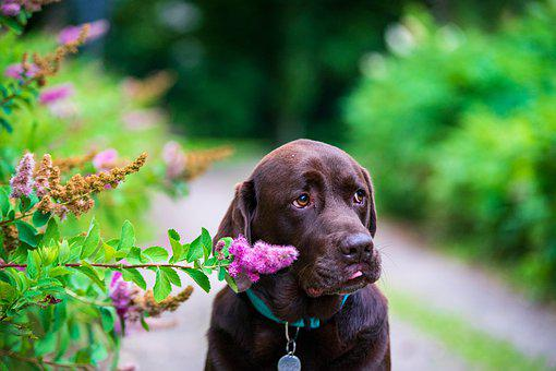 Labrador, Dog, Animal, Cute, Dog Breeds, Doggy Style