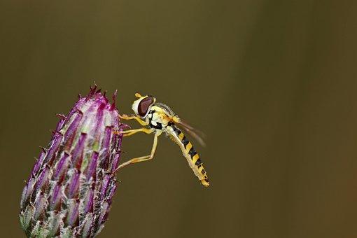 Insect, Flower, Nature, Summer, Garden, Bee, Meadow