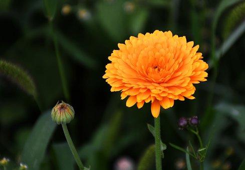 Nosegay, Orange, Green, Summer, Outdoor, Garden
