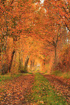 Autumn, Nature, Landscape, Gone Is The Goal, Trees