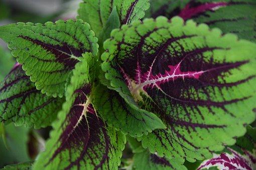 Plant, Color, Pattern, Leaf, Garden, Green, Purple