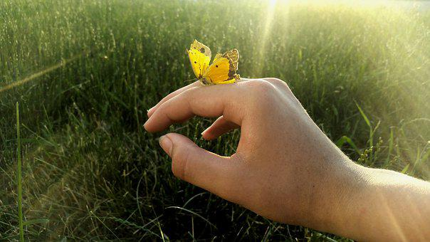 Butterfly, Hand, Summer, Design, Cute, Happy, Young