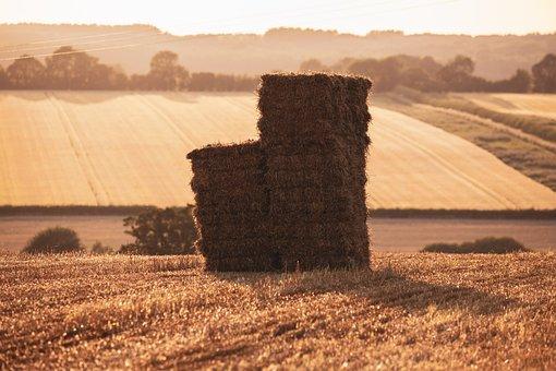 Hay Bale, Haystack, Summer, Harvest, England
