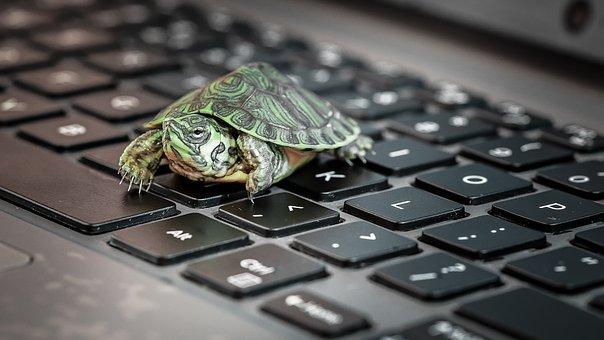 Turtle, Keyboard, Sick